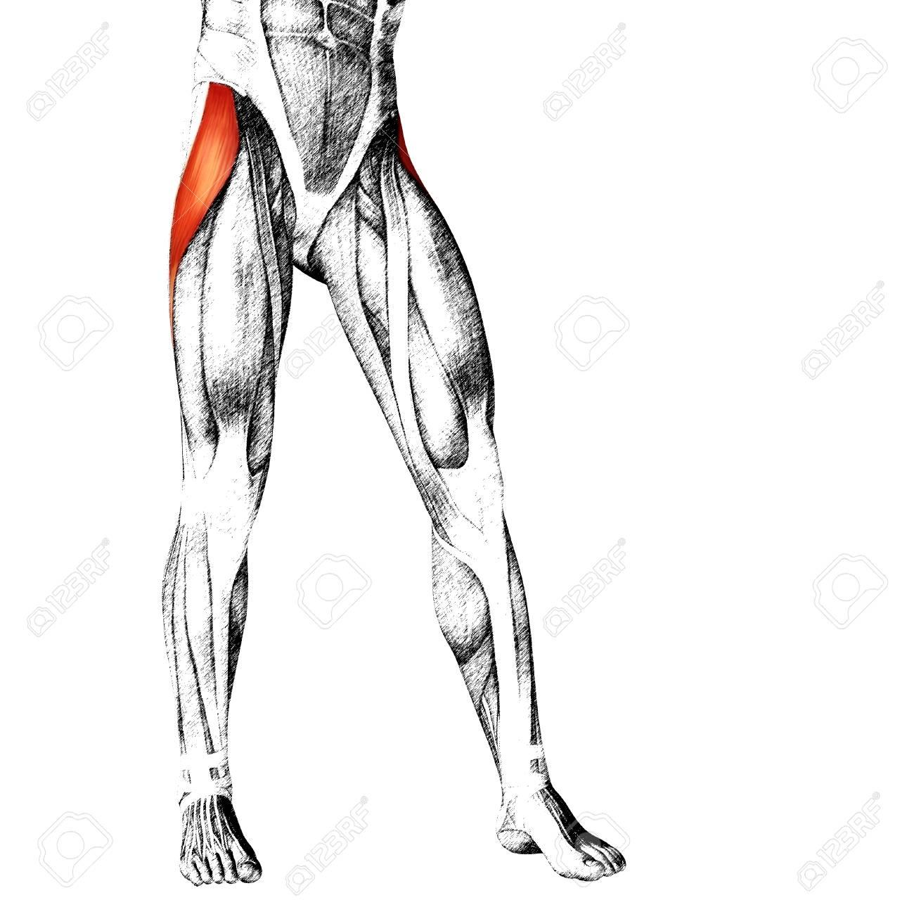 Excepcional Anatomía Pierna Superior Molde - Imágenes de Anatomía ...