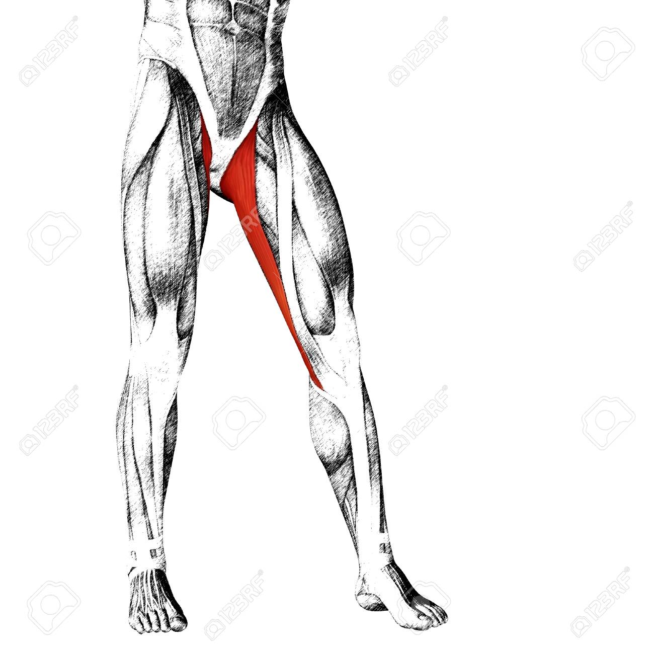 Atemberaubend Vordere Knieanatomie Bilder - Anatomie Von ...