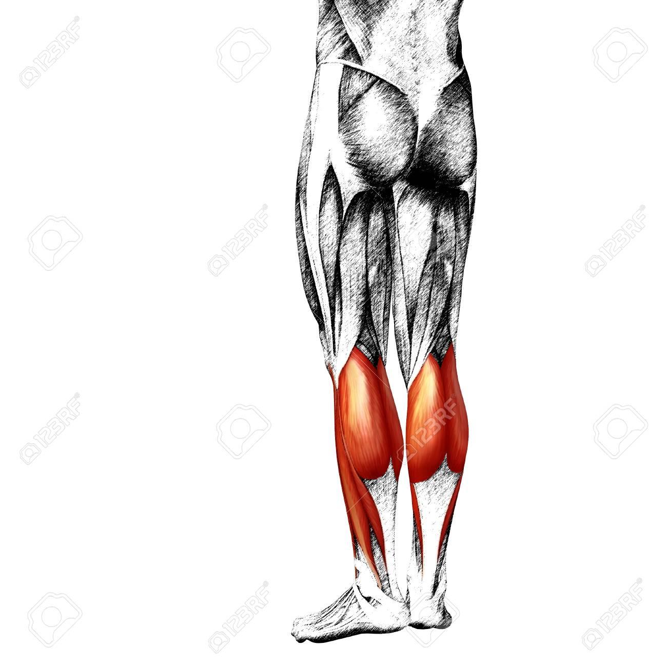 Wunderbar Vorderer Unterarm Anatomie Fotos - Anatomie Ideen ...