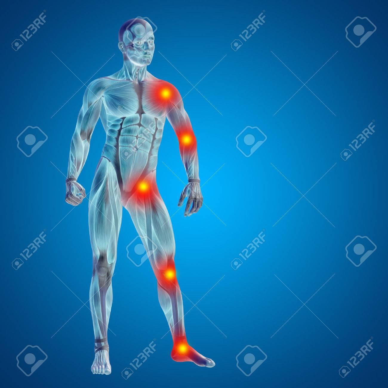 Fantastisch Grundlagen Der Menschlichen Anatomie Und Physiologie ...