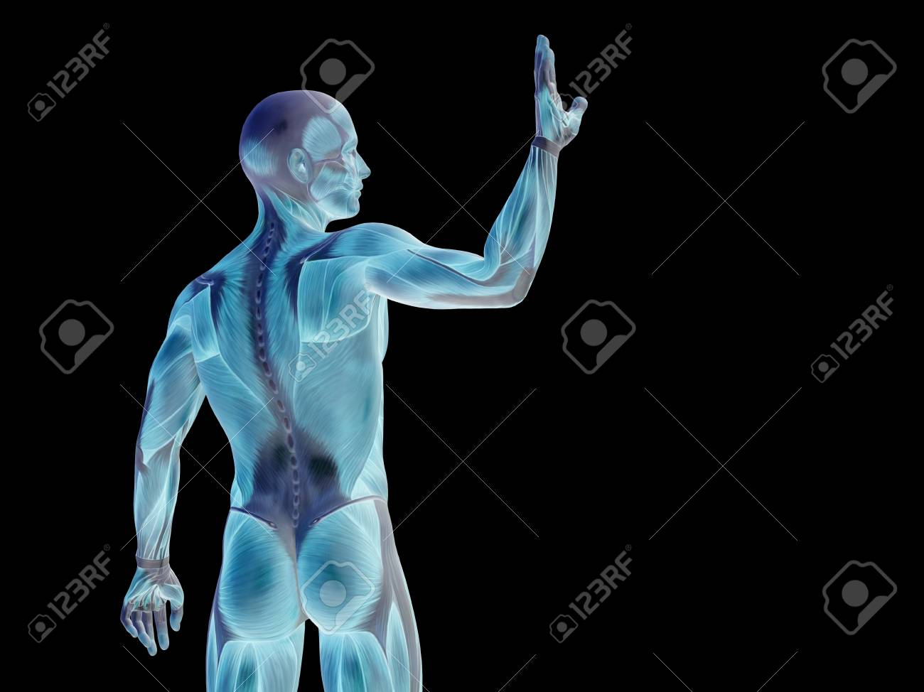 Conceptual Anatomía Del Cuerpo Humano Aislado En Fondo Negro Fotos ...