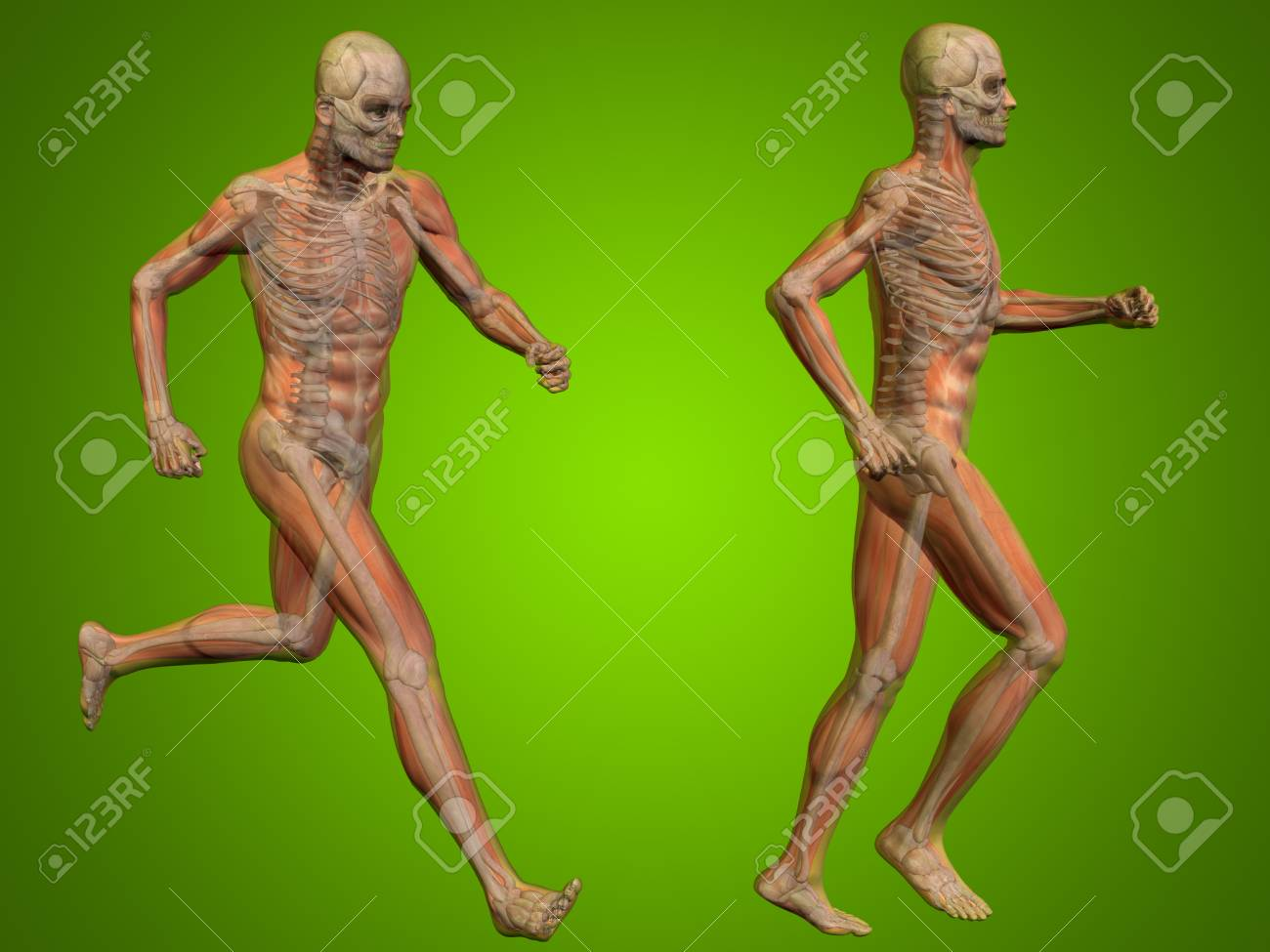Conceptual Man Or Human 3D Anatomy Or Body On Green Background Stock ...