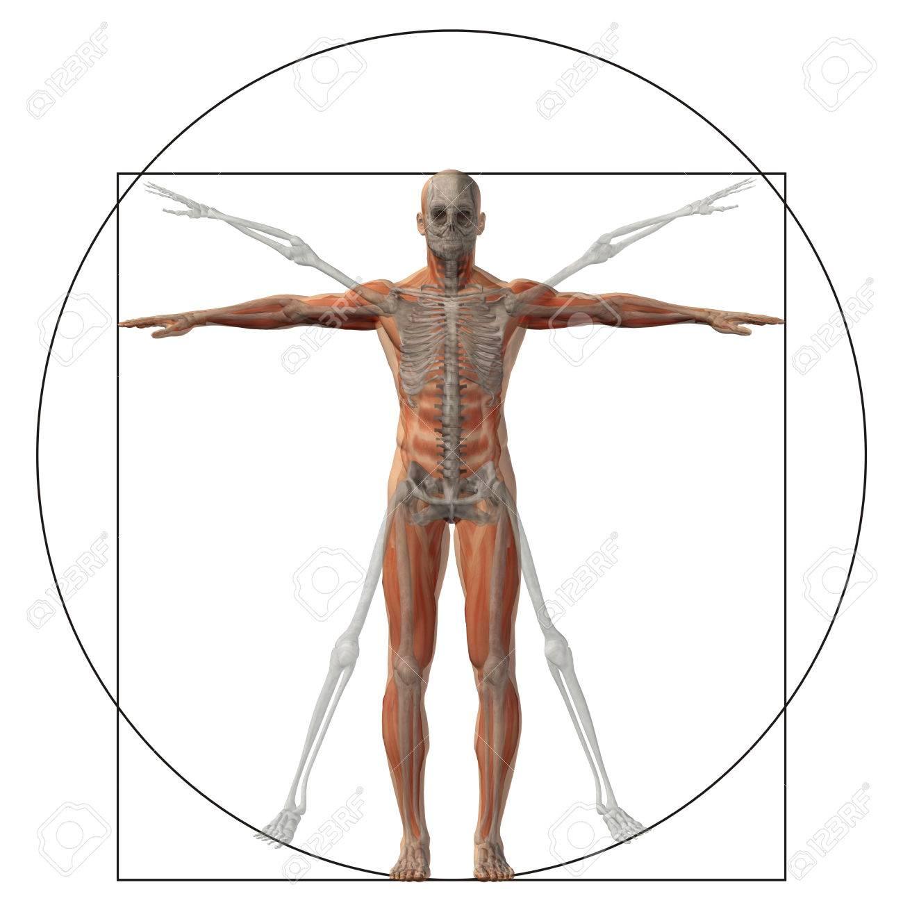 Fein Anatomie Des Graus Spielen Fotos - Menschliche Anatomie Bilder ...