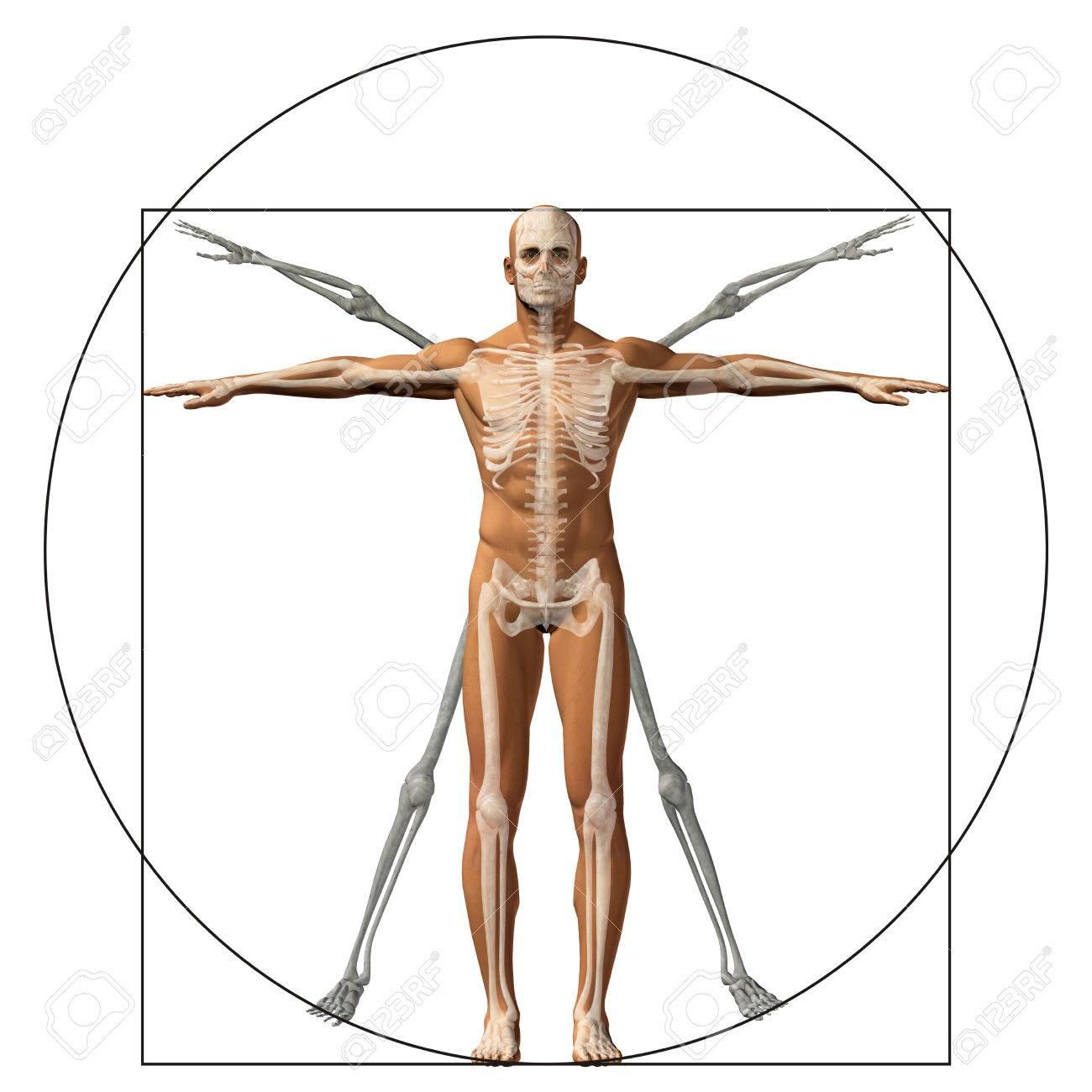 Erfreut Anatomie Lernen 3d Ideen - Anatomie Ideen - finotti.info