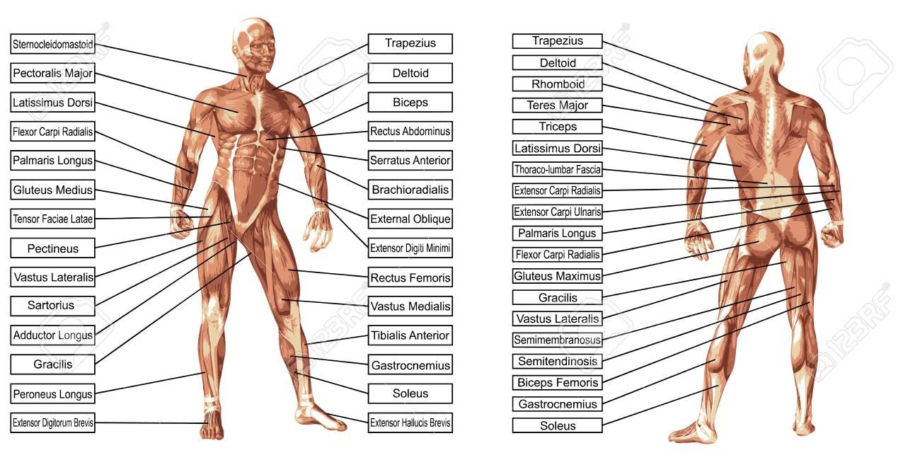 Schön Uvealtractus Anatomie Bilder - Anatomie Ideen - finotti.info