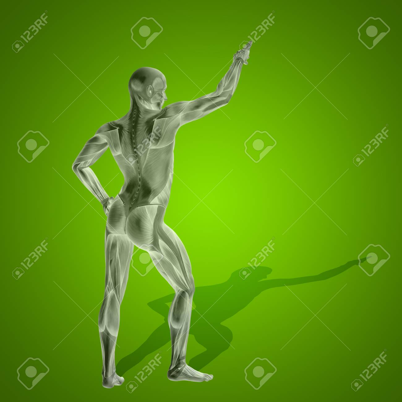 Concept Strong Human Or Man 3D Anatomy Body With Muscle For Health ...
