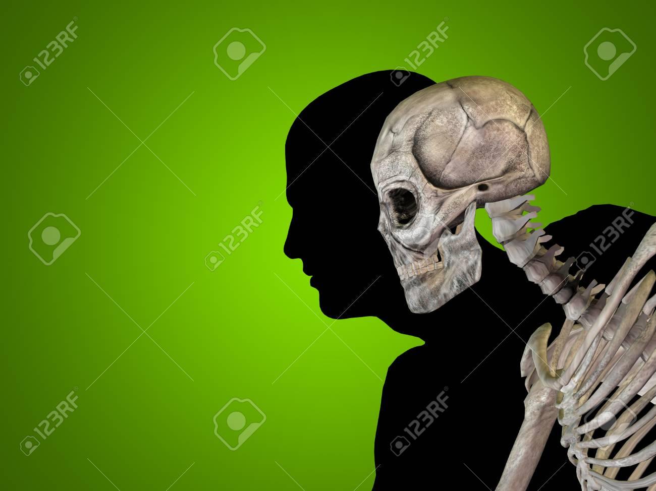 Konzeptionelle Anatomie Menschlichen Körper Auf Grünem Hintergrund ...
