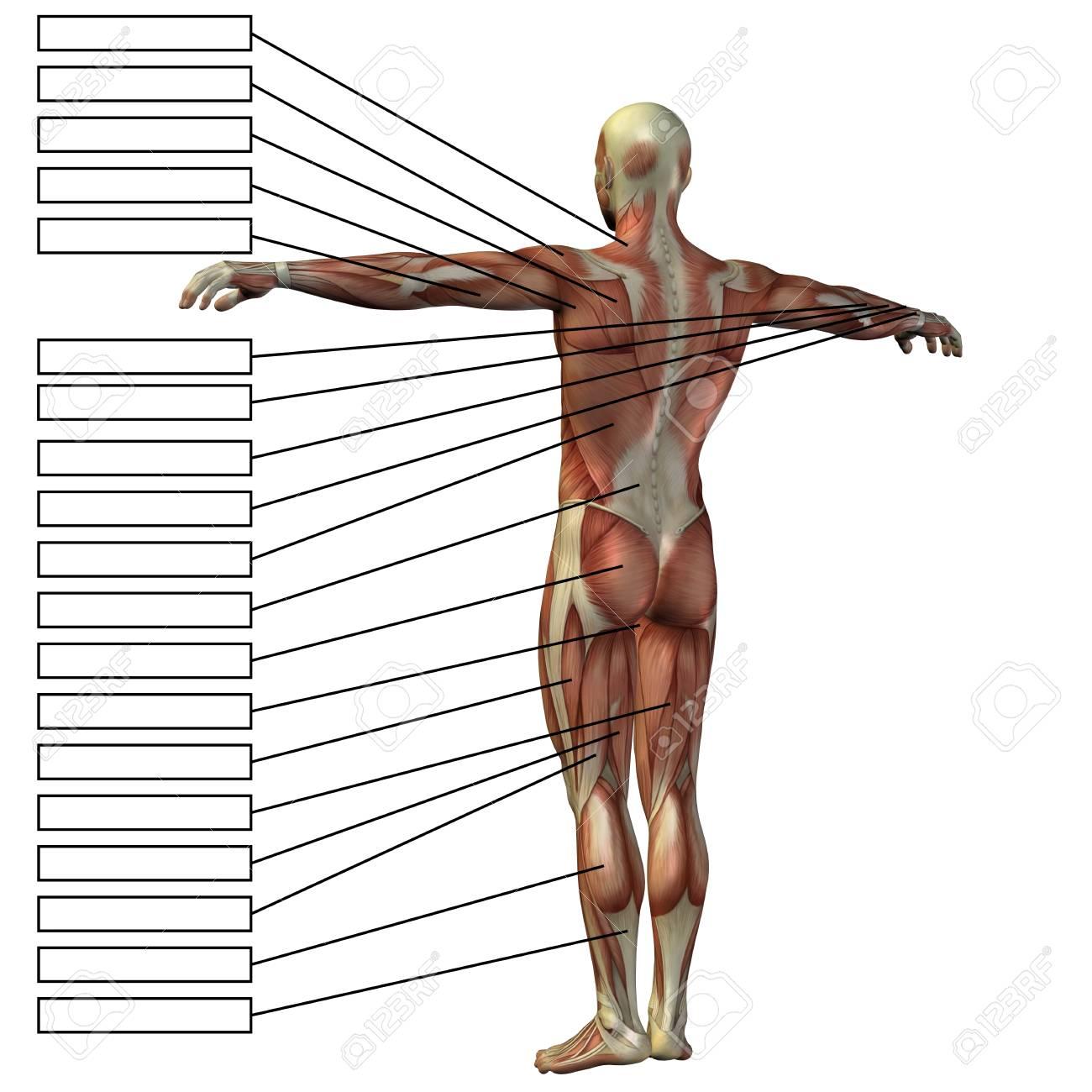 Famoso Bosquejo De La Anatomía Masculina Ornamento - Imágenes de ...