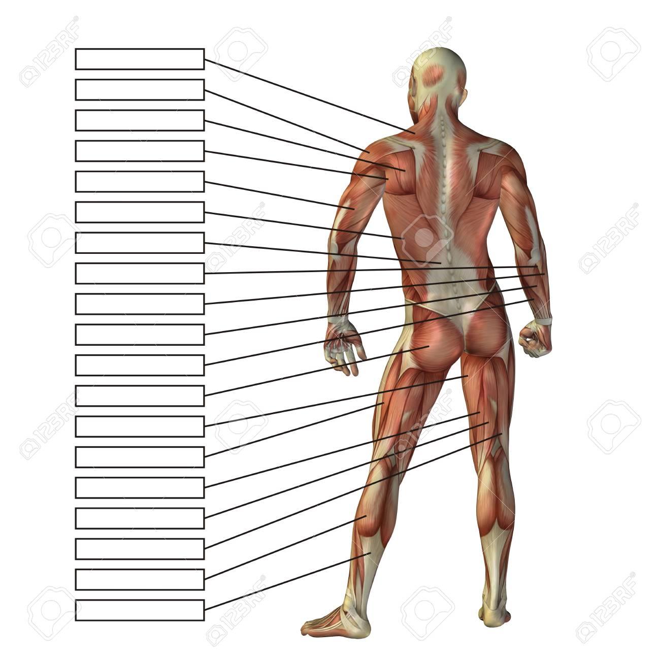 Atemberaubend Tdwp Anatomie Texte Zeitgenössisch - Anatomie Von ...