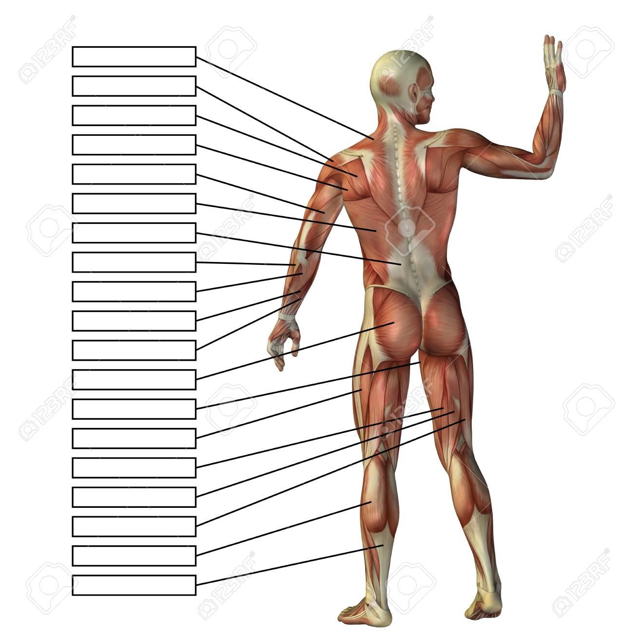 Atractivo Clínicamente Descarga Anatomía Orientada Viñeta - Imágenes ...