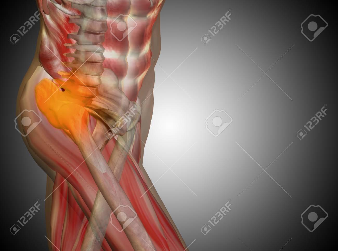 Excepcional Grises Anatomía Verlo Cresta - Anatomía de Las ...