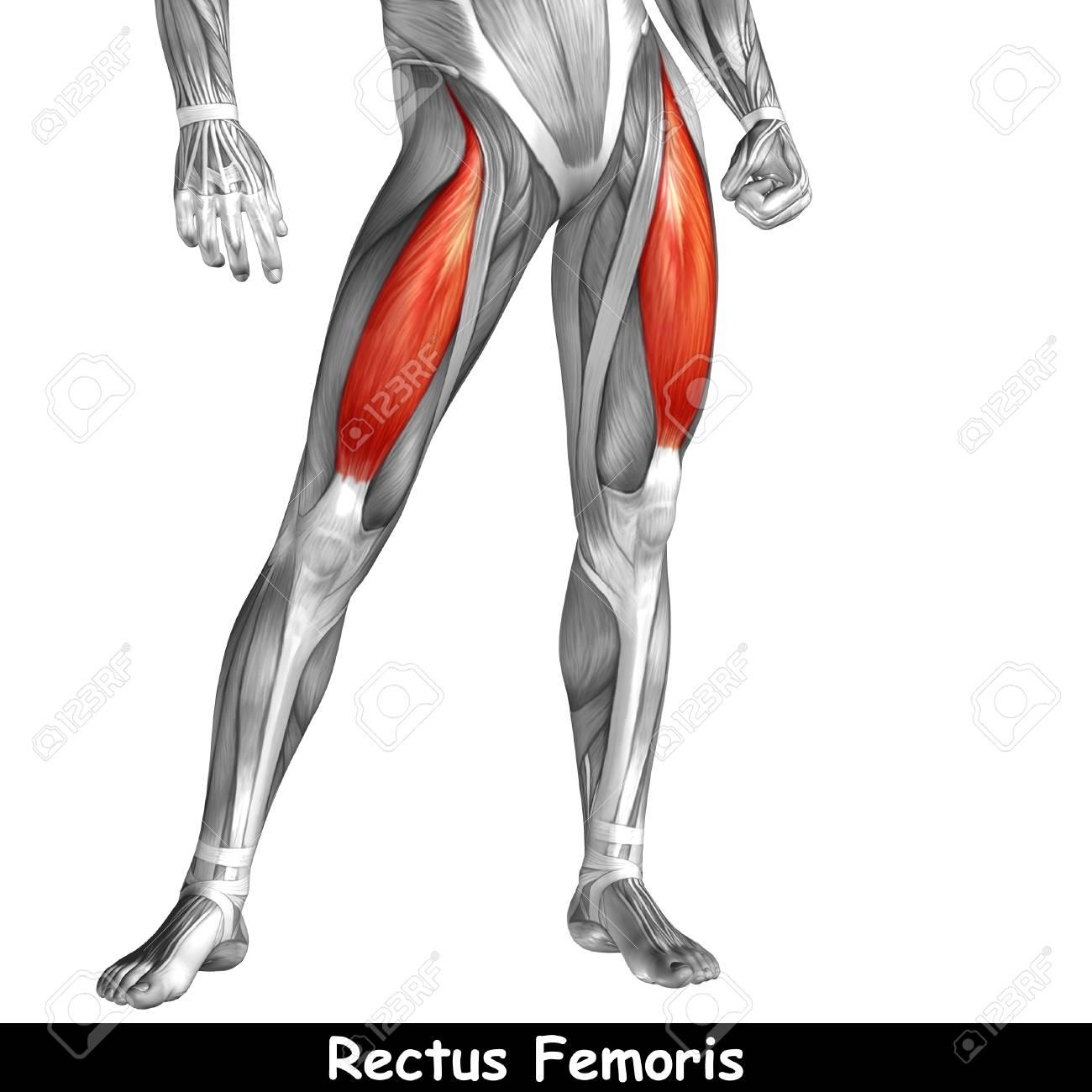 Charmant Menschliche Anatomie Beinmuskeln Diagramm Ideen ...