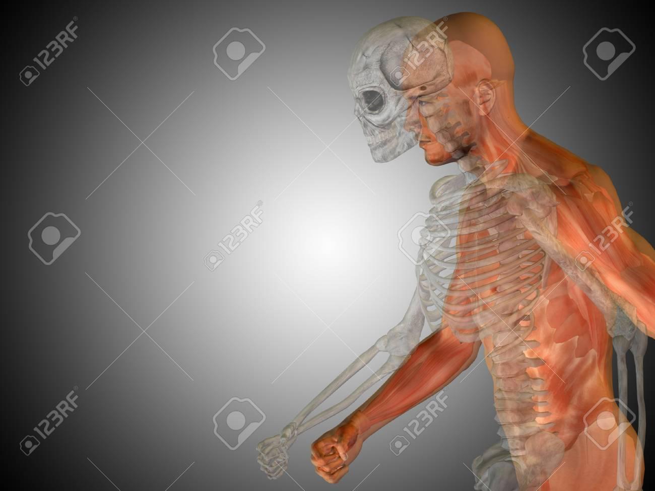 Ziemlich Atlas Und Dissektion Führung Für Vergleichende Anatomie ...