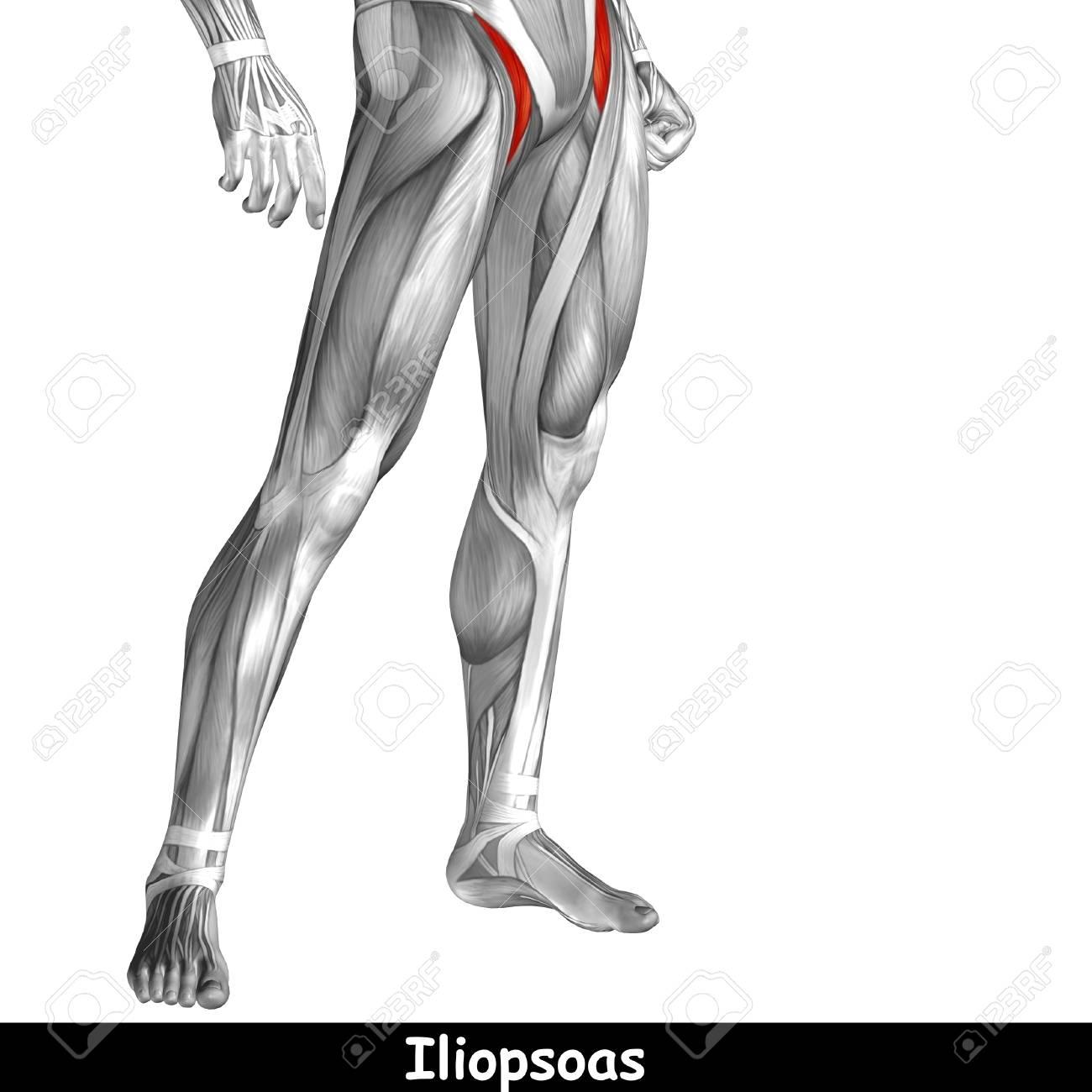 Perfecto Círculo Mra De Willis Anatomía Viñeta - Anatomía de Las ...