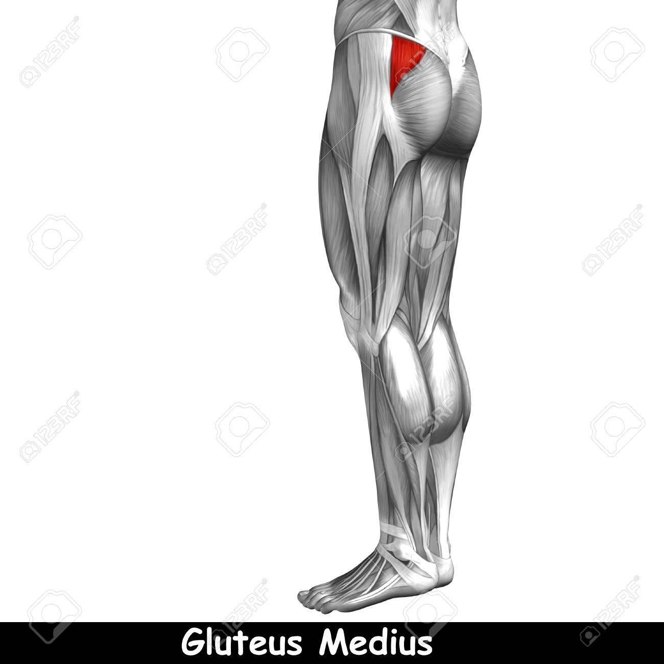 Berühmt Muskelanatomie Test Zeitgenössisch - Anatomie Ideen ...