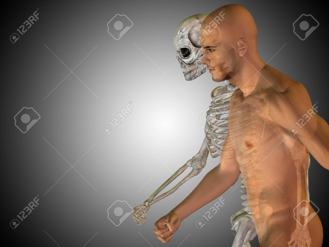 Famoso Gris Anatomía Friso - Imágenes de Anatomía Humana ...