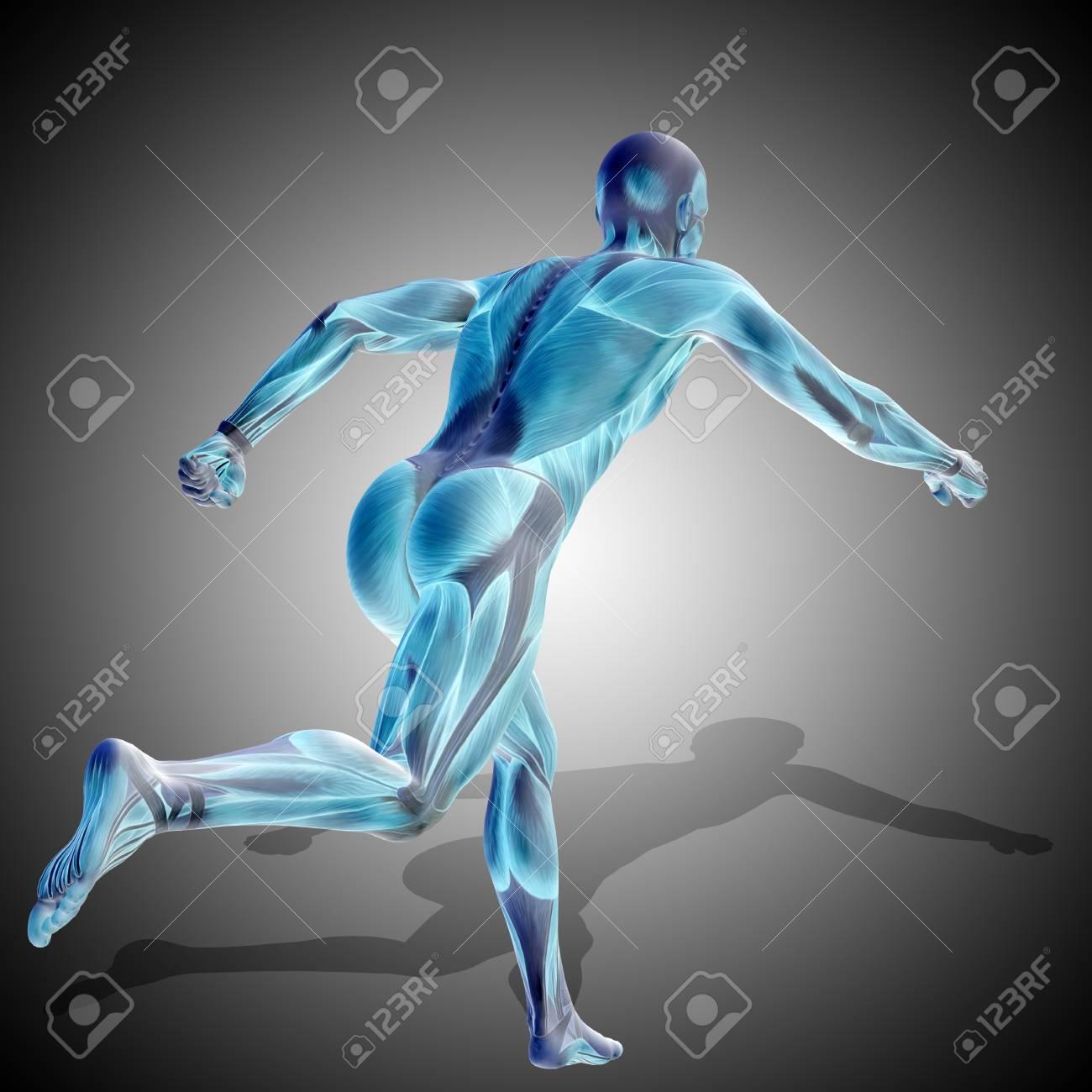Concepto Fuerte Hombre Humano Ilustración 3D Anatomía Cuerpo Con ...