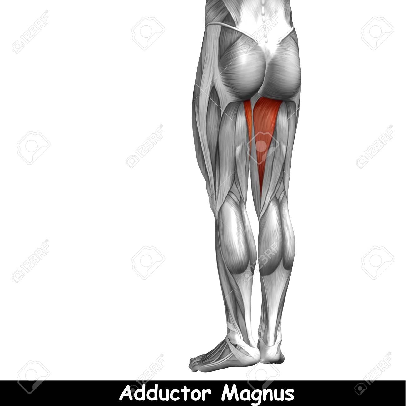 Excepcional Diagrama De Columna Vertebral Anatomía Humana ...