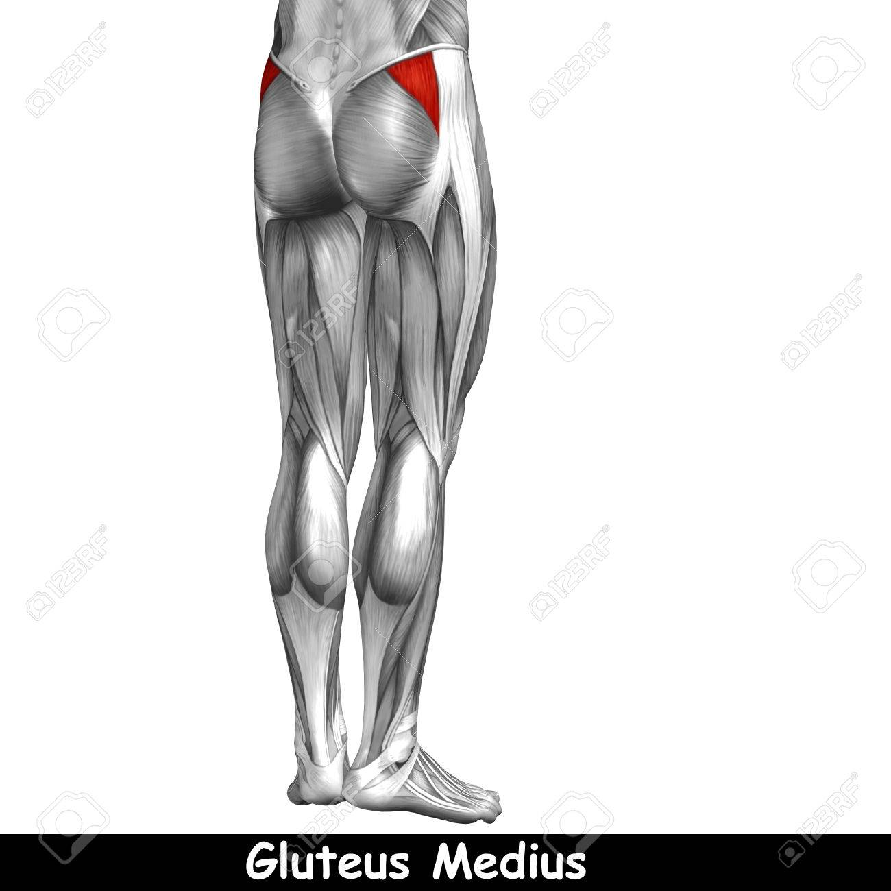 Perfecto Músculos De La Espalda Superior Anatomía Galería - Imágenes ...