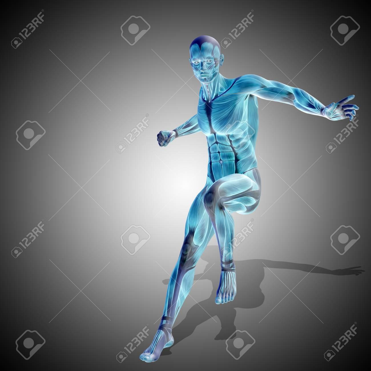 Bonito Anatomía Fundido Gris Friso - Anatomía de Las Imágenesdel ...