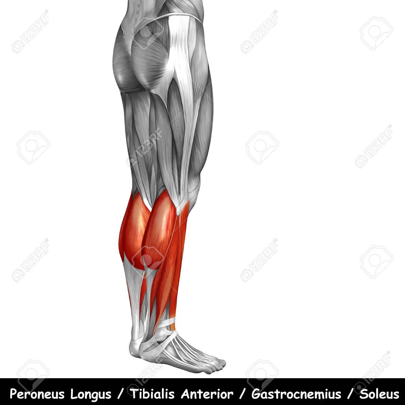 Fantástico Gráfico De La Anatomía De Espalda Baja Imagen - Imágenes ...