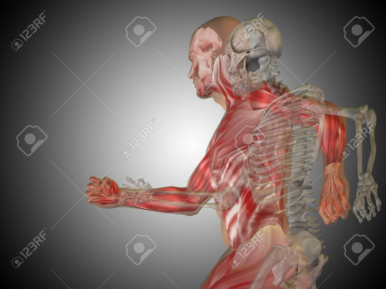 Konzeptionelle Anatomie Menschlichen Körper Auf Grauem Hintergrund ...