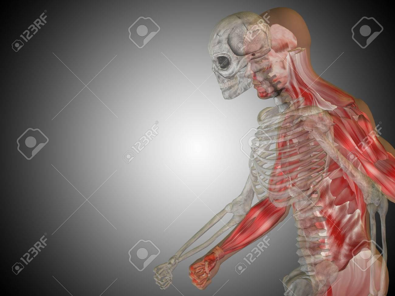 The unfashionable human body 45