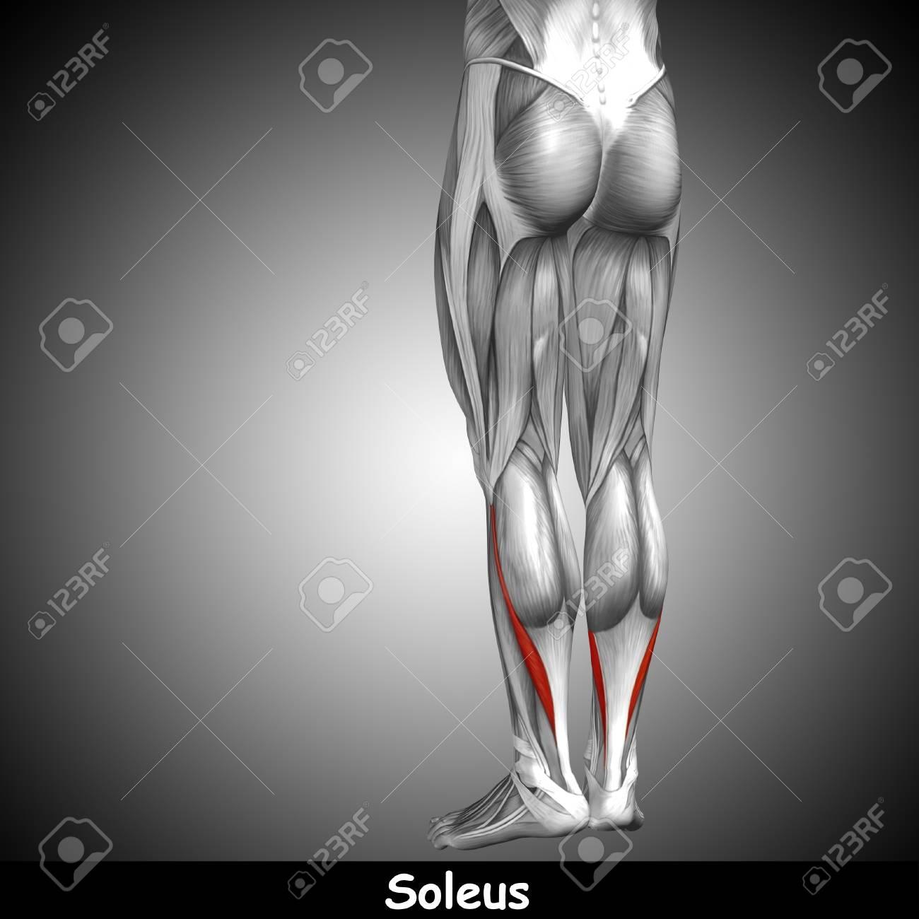 Konzeptionelle 3D Menschlichen Rücken Unteren Bein Muskelanatomie ...
