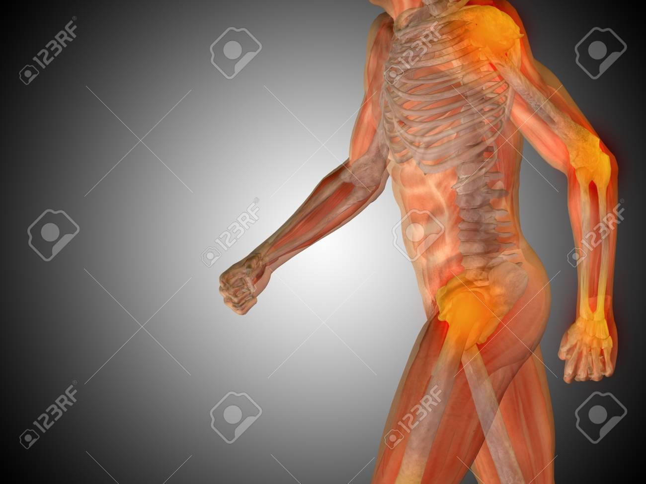 Niedlich Körperanatomie Bilder Ideen - Menschliche Anatomie Bilder ...