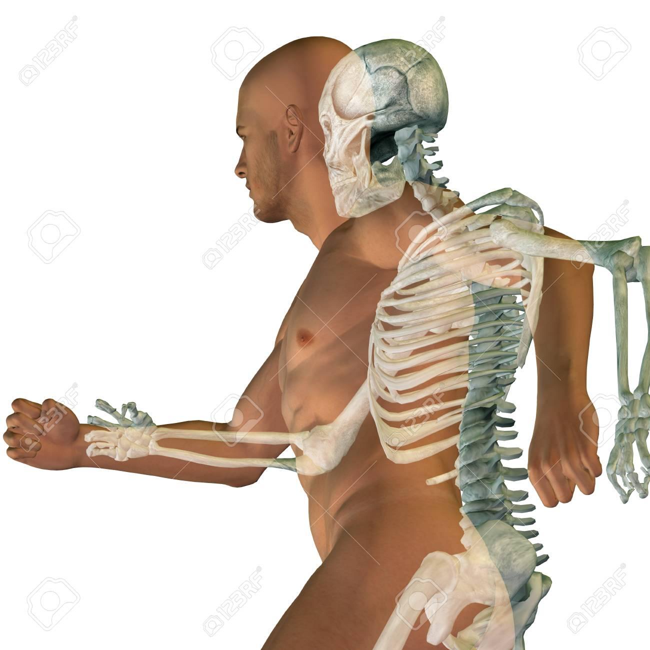 Konzeptionelle Anatomie Menschliche Körper Auf Hintergrund ...