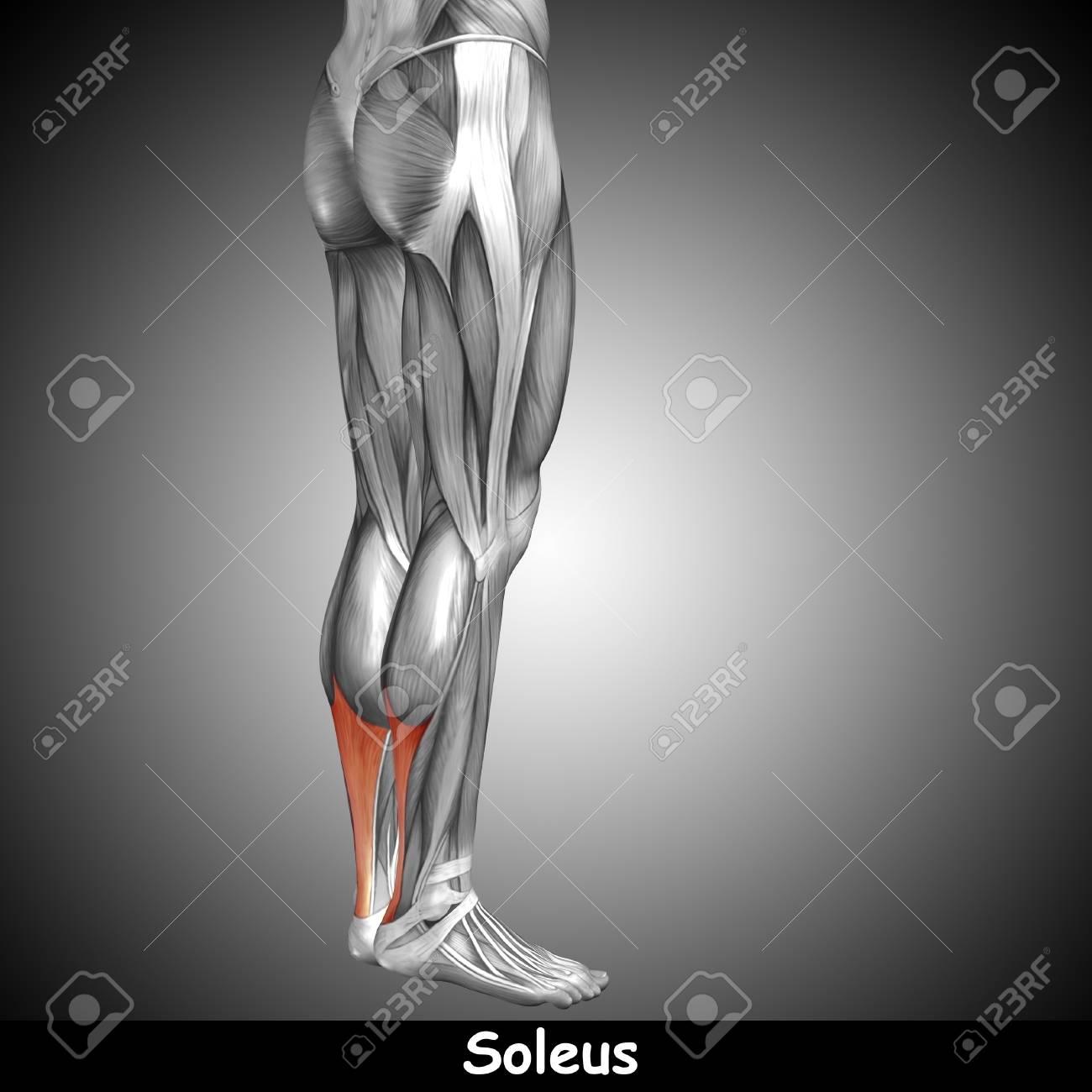 Atractivo Anatomía Y Fisiología Por Marieb Elaboración - Anatomía de ...