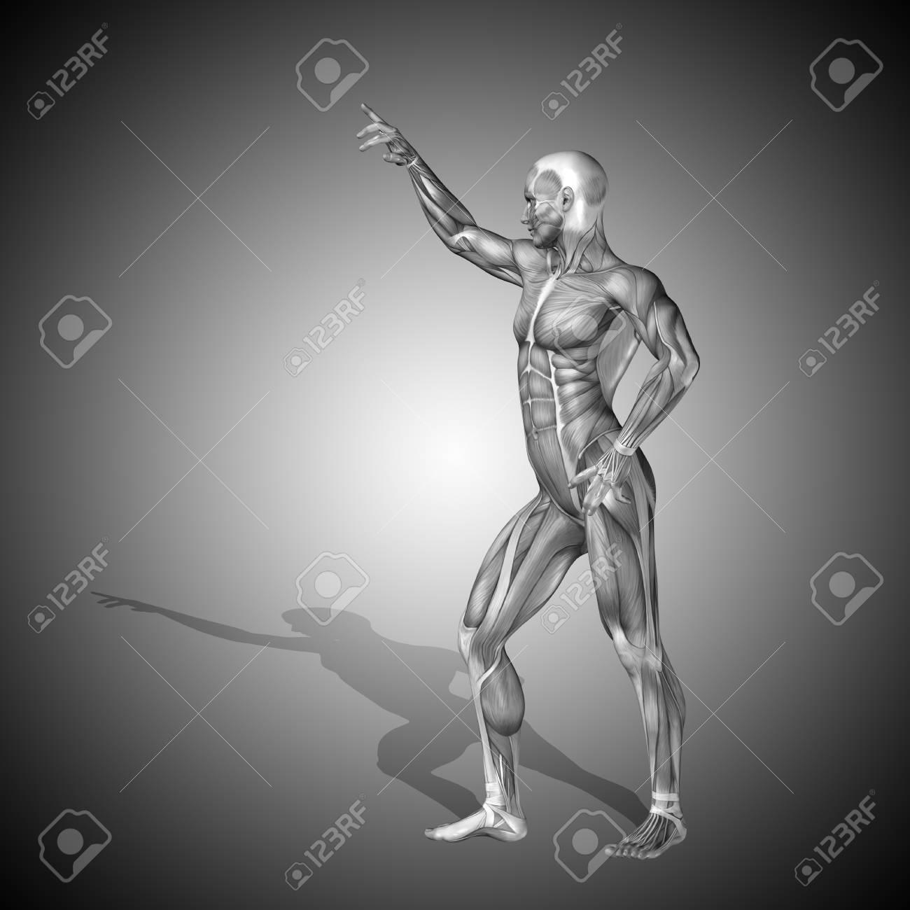 Conceptual 3D Hombre Anatomía Humana Salud En El Fondo Gris Fotos ...