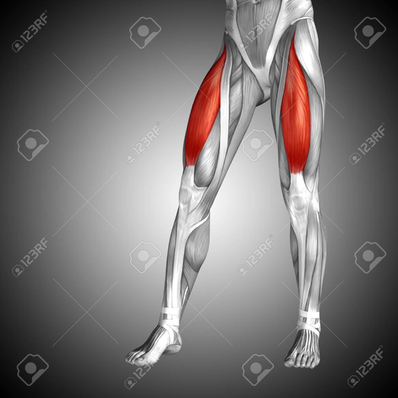 Conceptual 3D Humana Parte Superior De La Parte Superior De La ...