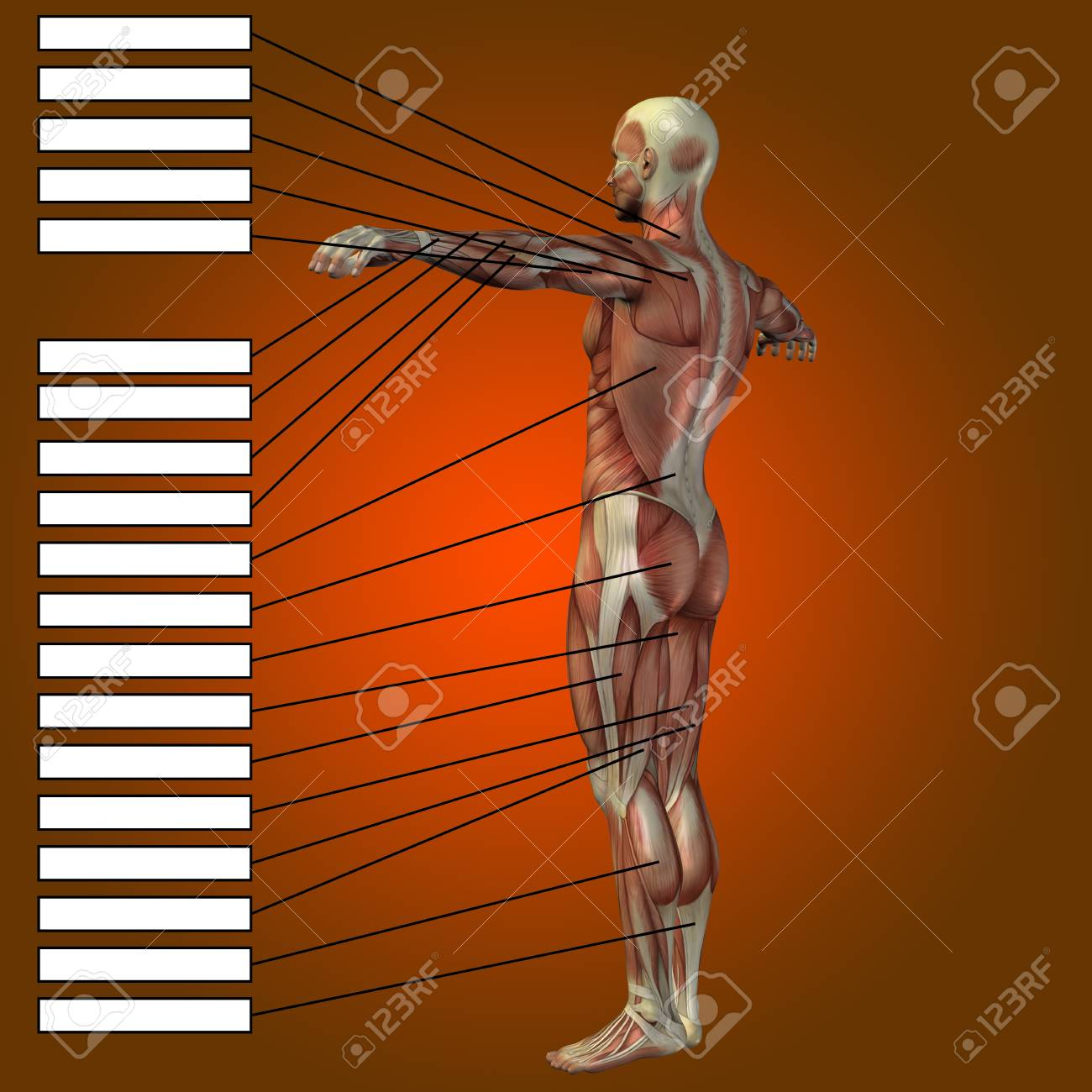 3D Human Male Anatomy With Muscles And Text Box On Red Background ...