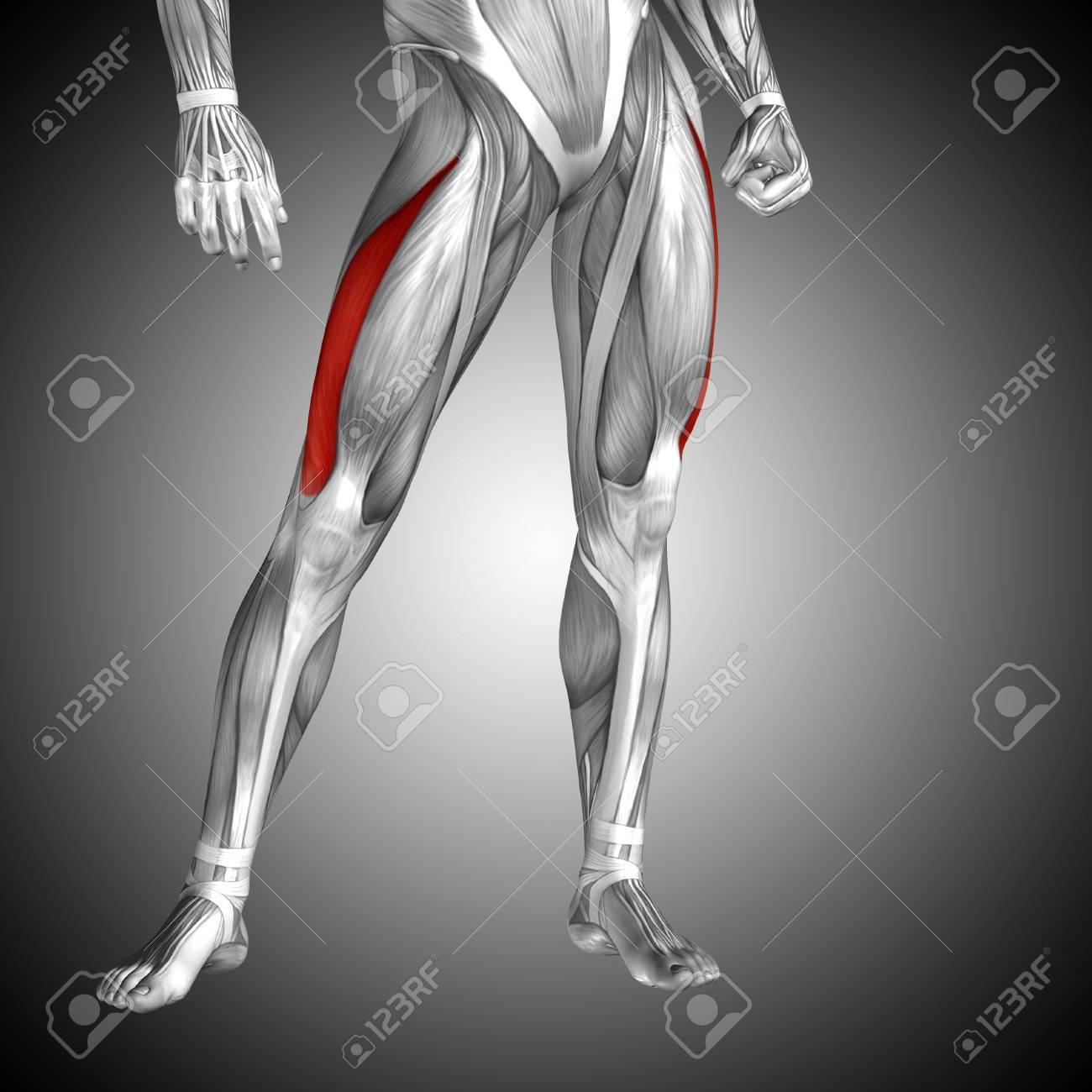 Lujo Anatomía Y Fisiología Humana Marieb 8ª Edición Pdf Ornamento ...