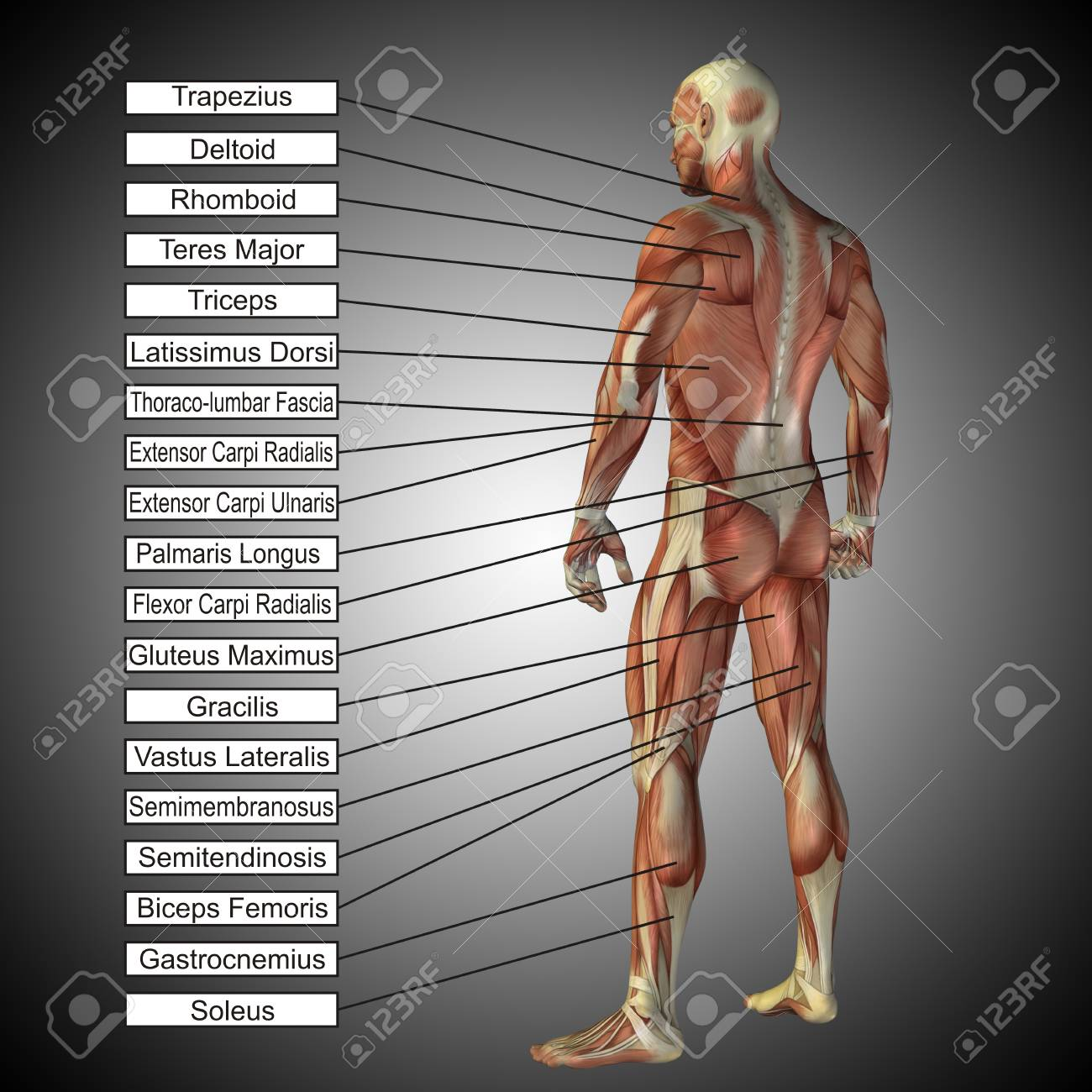 Lujo Grises Anatomía 2012 Regalo - Anatomía y Fisiología del Cuerpo ...