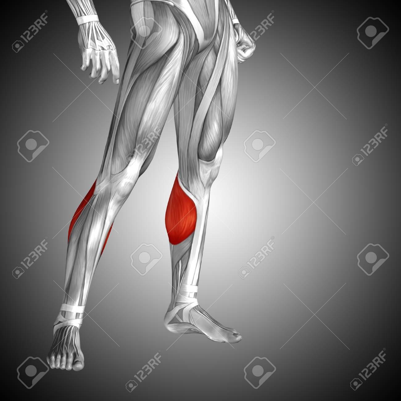 Atractivo Inferior Diagrama De La Anatomía De La Pierna Ideas ...
