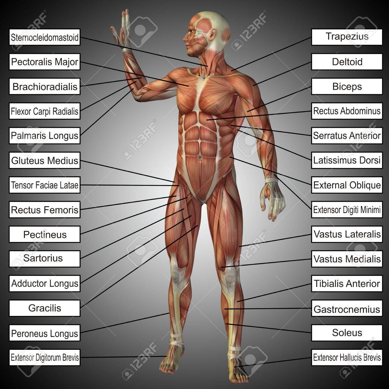 Lujo Grises Anatomía S06e11 Ornamento - Imágenes de Anatomía Humana ...