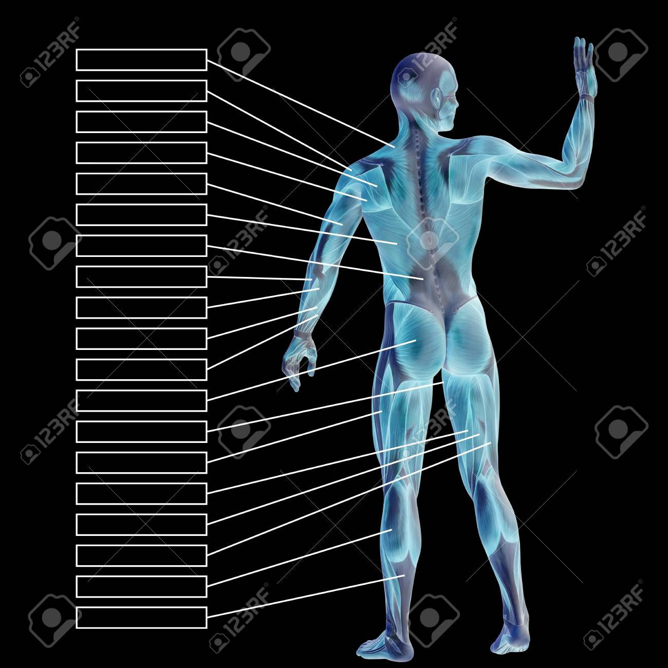 3D Human Male Anatomy With Muscles And Text Box Isolated On Black ...
