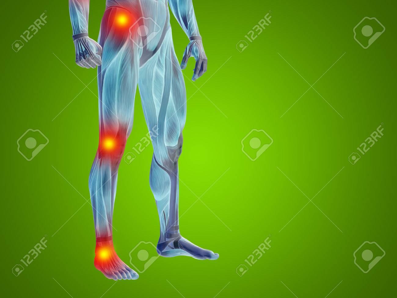 Tolle Bild Von Gelenken Des Menschlichen Körpers Bilder ...