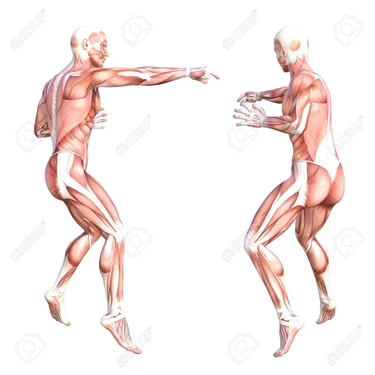Schön Interaktives Muskelsystem Galerie - Menschliche Anatomie ...