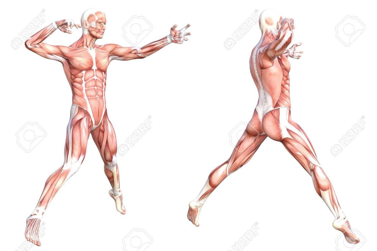 Gemütlich Organstellen Menschliche Körper Fotos - Menschliche ...