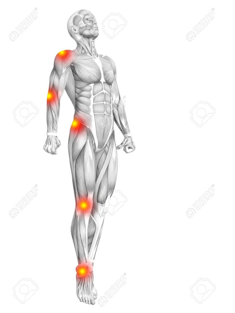 Conceptual Human Muscle Anatomy With Red And Yellow Hot Spot.. Stock ...