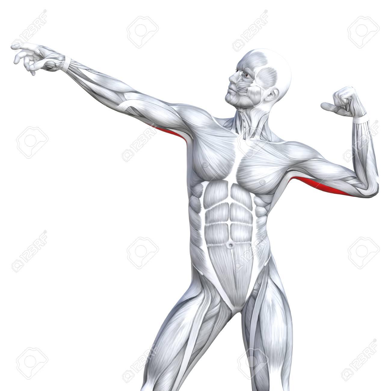 Moderno Anatomía Y Fisiología A2 Hesi Guía De Estudio Bandera ...