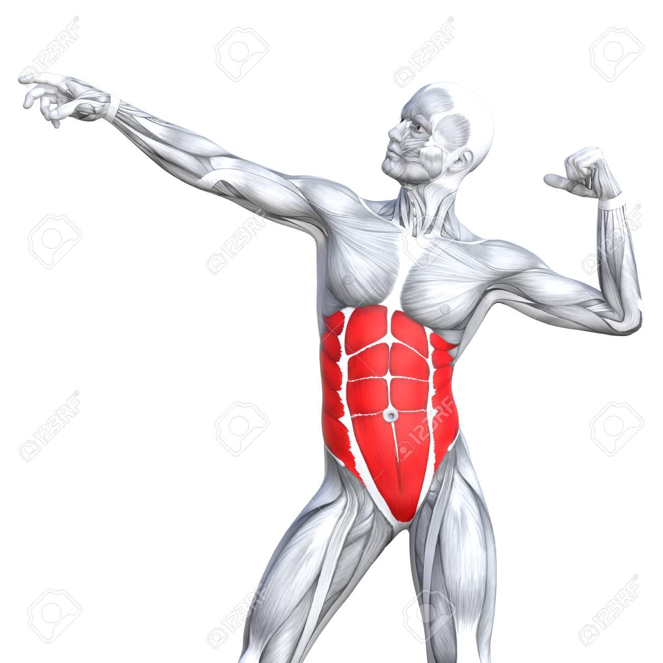 Ilustración Conceptual 3D Cofre Ajuste Anatomía Humana Fuerte O ...