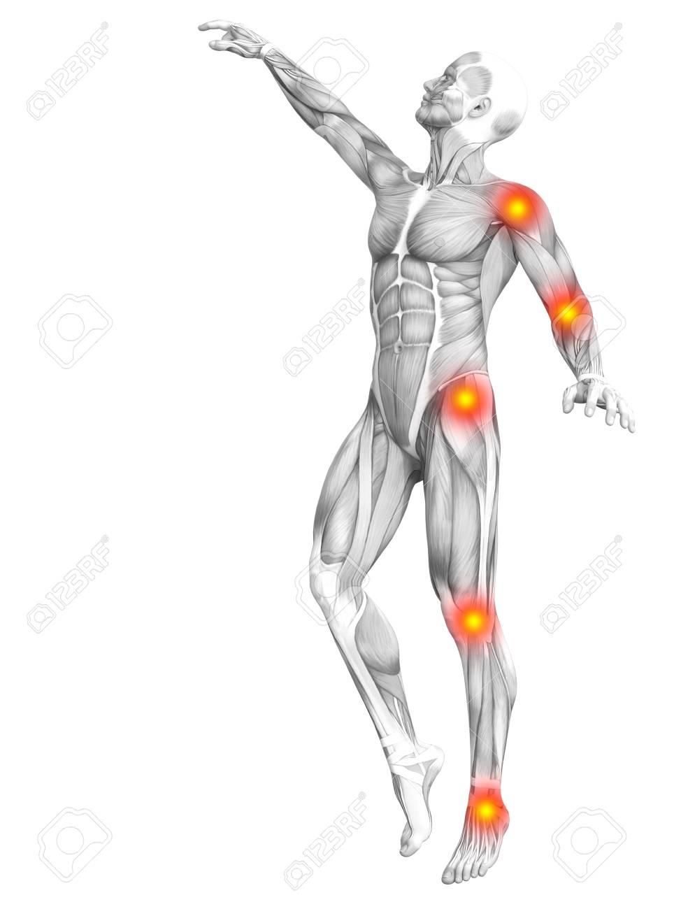 Magnífico Nalgas Humanos Anatomía Modelo - Imágenes de Anatomía ...