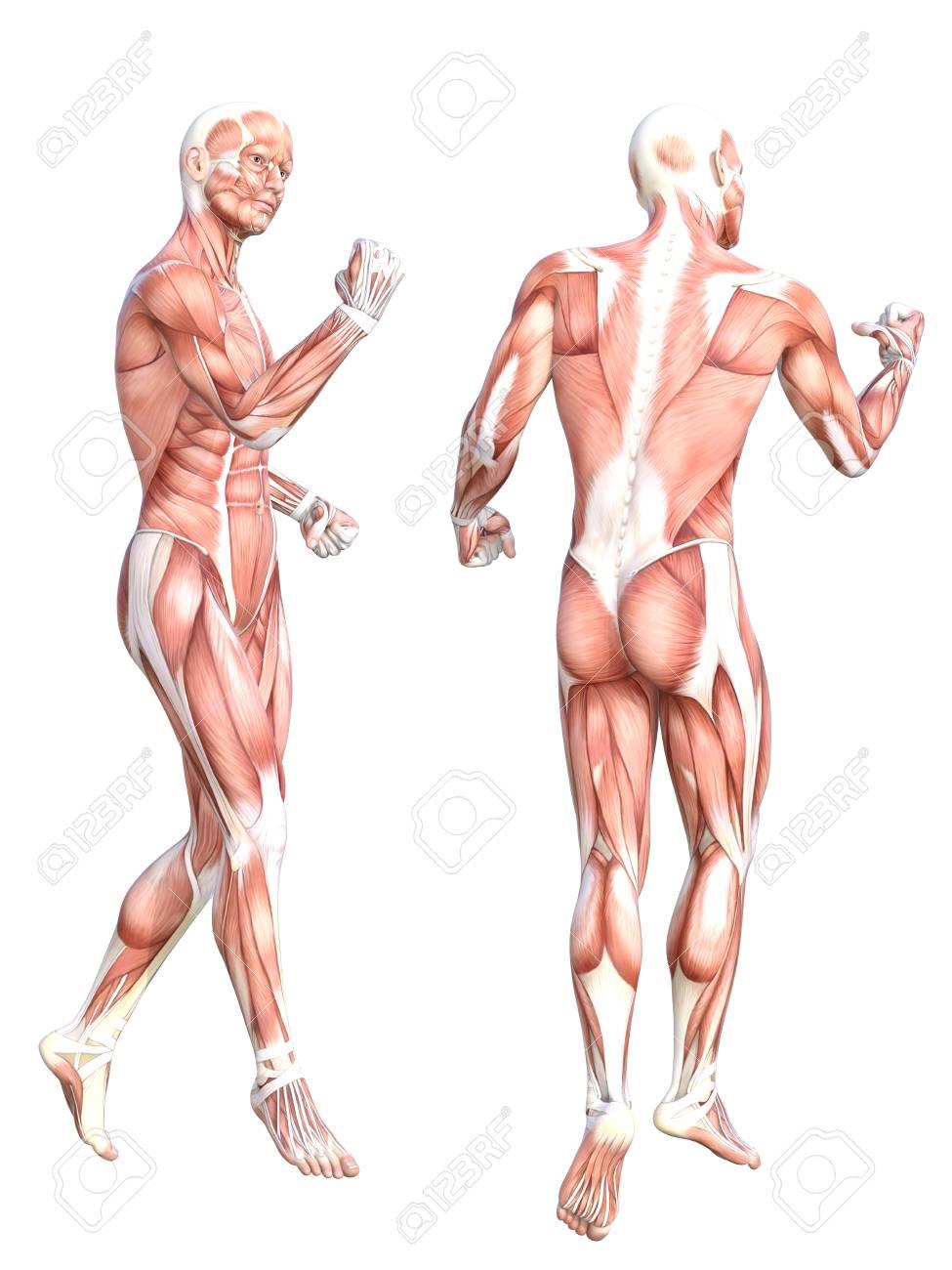 Magnífico Abby Y Anatomía Bretaña Regalo - Anatomía de Las ...