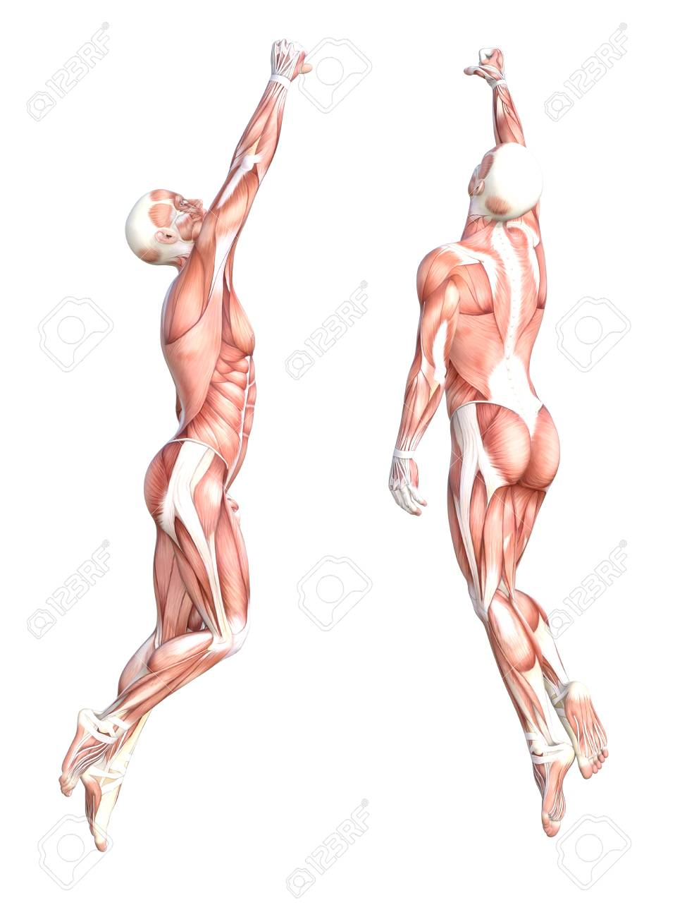 Conceptual Anatomy Healthy Skinless Human Body Muscle System.. Stock ...