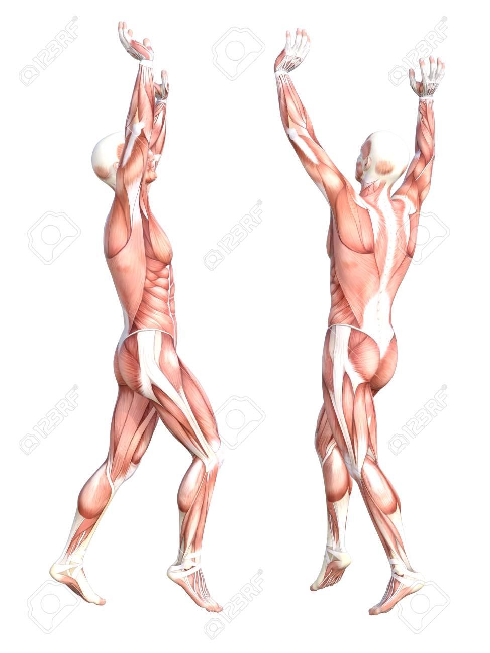 Perfecto Capítulo 10 Anatomía Del Sistema Muscular Componente ...