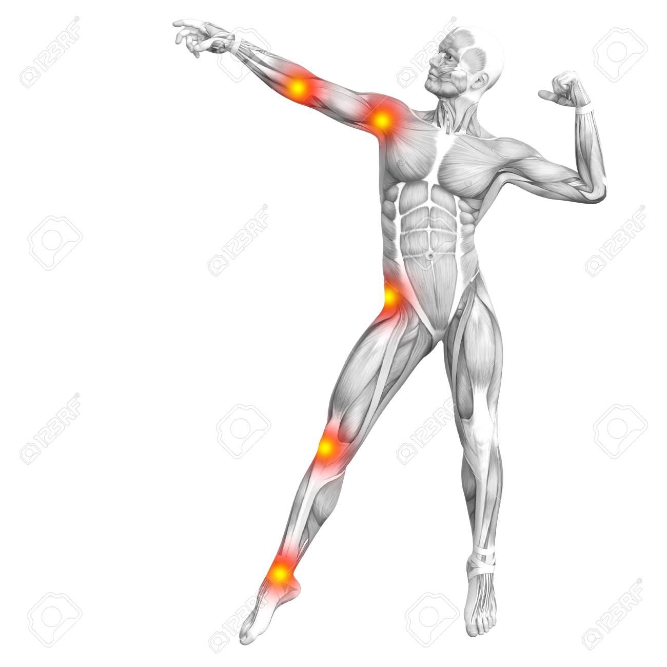 Konzeptionelle Menschliche Muskelanatomie Mit Roten Und Gelben ...